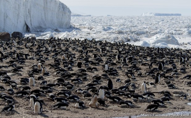 La pinguinaia di Cape Hallett