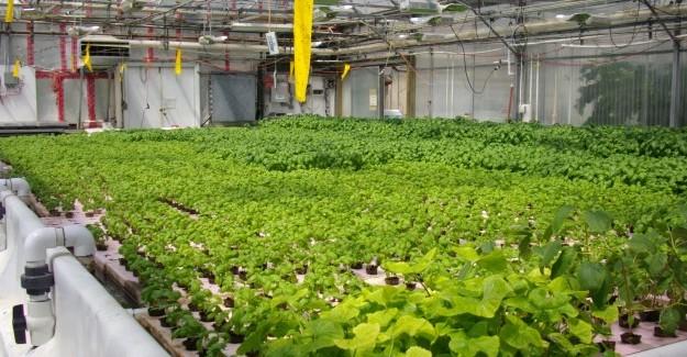 Fattorie verticali: agricoltura areo acqua ed idroponica a confronto