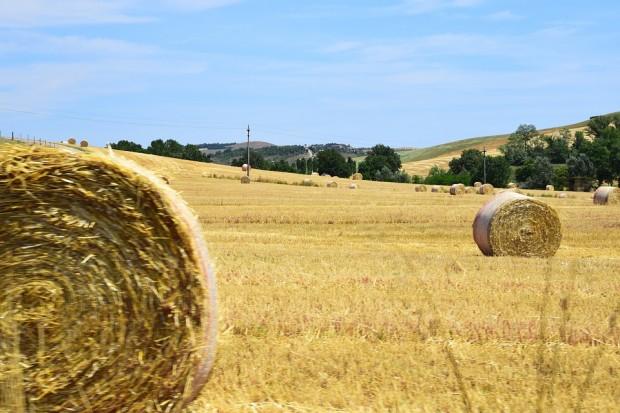 agricoltura e allevamento europa