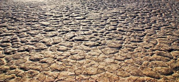 cop 14 desertificazione