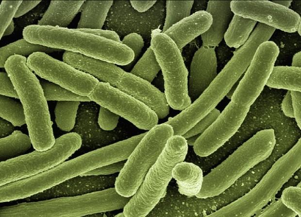 produrre idrogeno bio