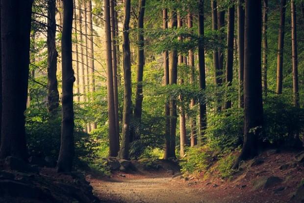 Energia dal legno