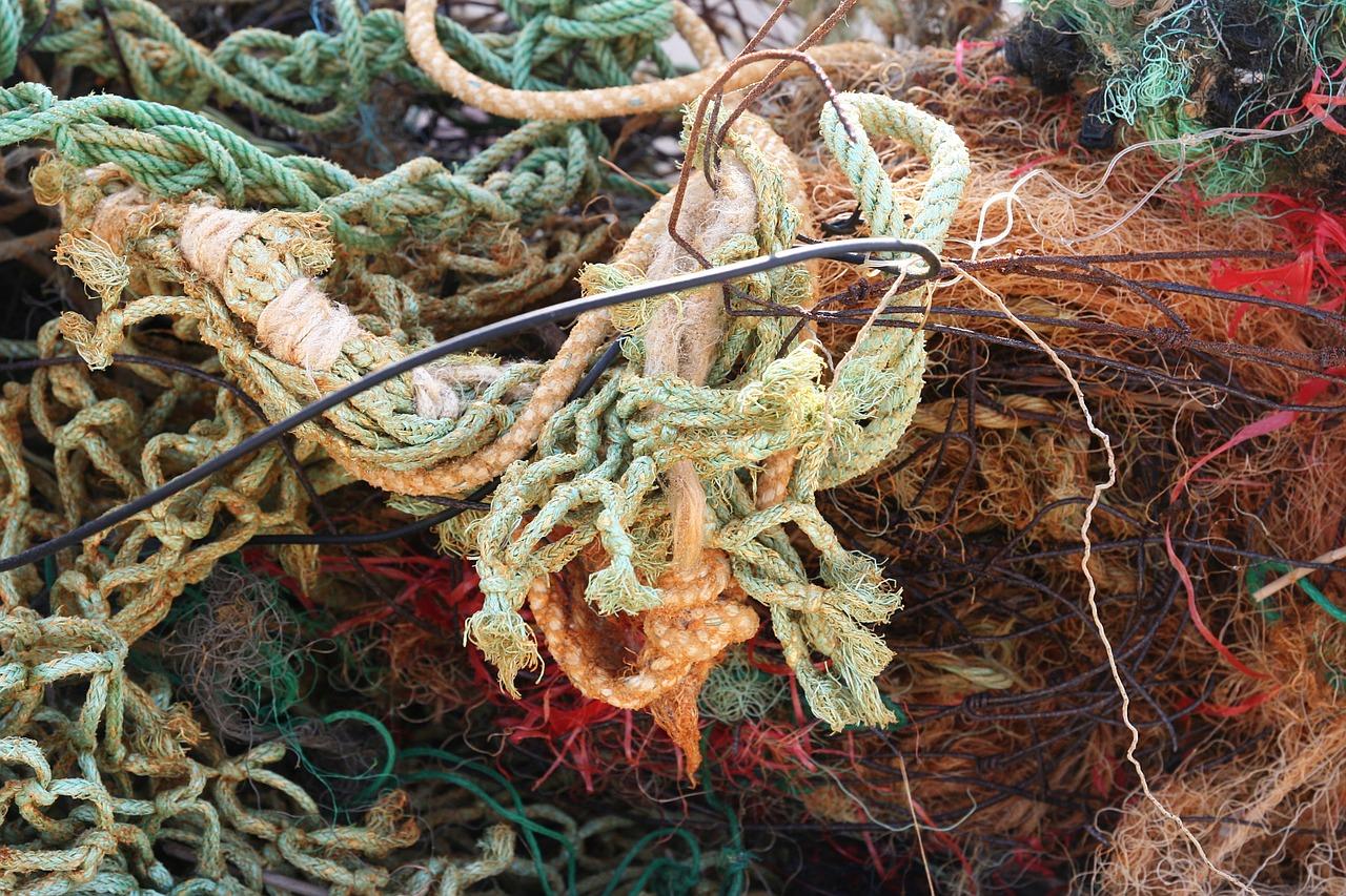 rifiuti ittici