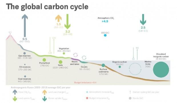 Bilancio del carbonio