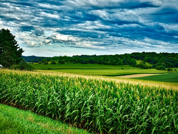 Resa agricola
