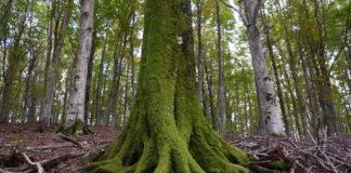foreste sostenibili Italia