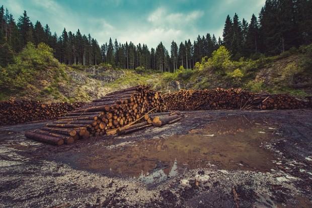 Esportazione del legno