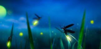 Popolazione di insetti