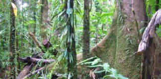 piante fossili