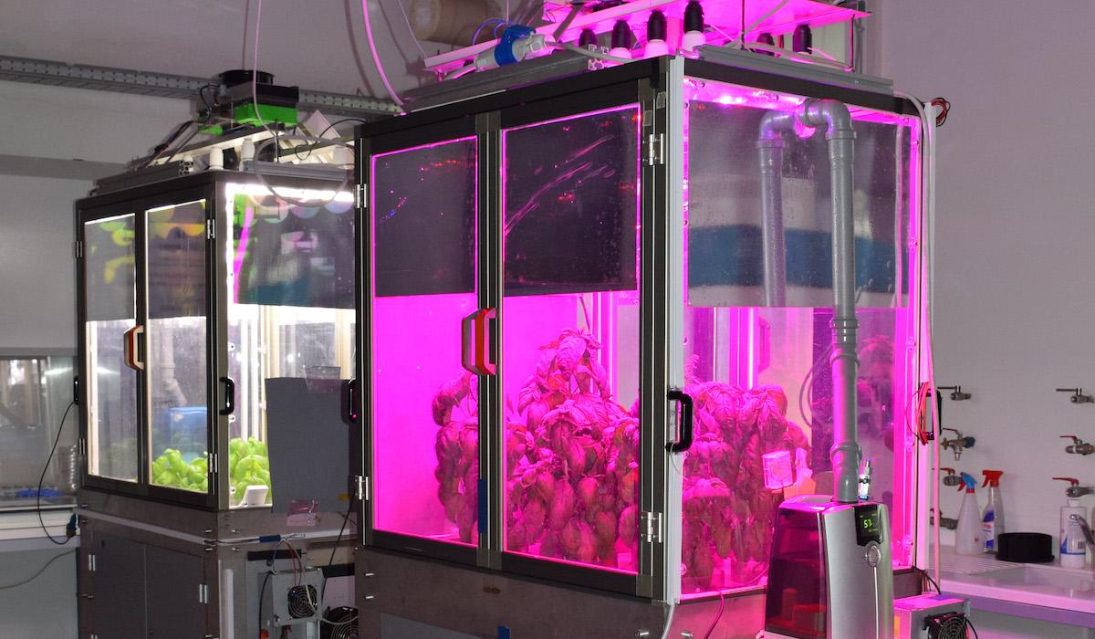 microcosmo coltivazione indoor