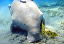megafauna marina