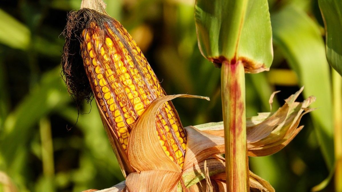 Attivitò agricole