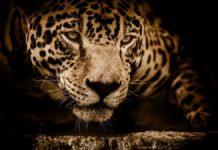 Commercio illegale di fauna selvatica