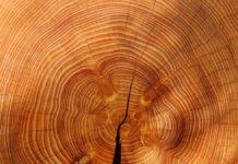 Raccolta di legname