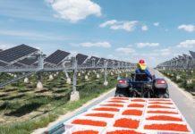 agro fotovoltaico