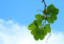Giornata internazionale dell'aria pulita e i cieli azzurri