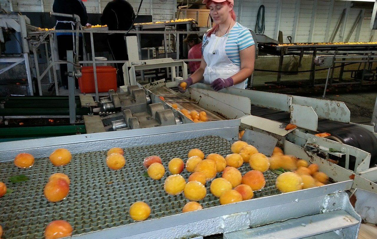 L'effetto Covid sull'industria alimentare - Rinnovabili.it