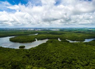 Deforestazione: Bolsonaro taglia i fondi 2021 per la protezione dell'ambiente
