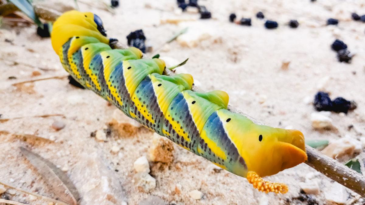 Apocalisse degli insetti: ogni anno ne muore il 2%