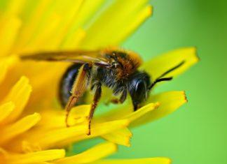 Biodiversità: la strage silenziosa degli impollinatori