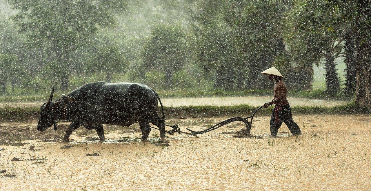 piccoli produttori agricoli