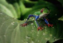 Cintura tropicale della pioggia: il climate change porta siccità e insicurezza alimentare