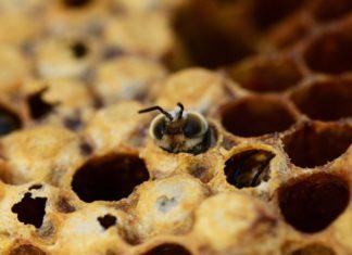 Pesticidi e nuovi Ogm: caos Brexit, a rischio gli standard UE