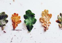 Riscaldamento globale: solo 20 anni al punto di non ritorno per le foreste