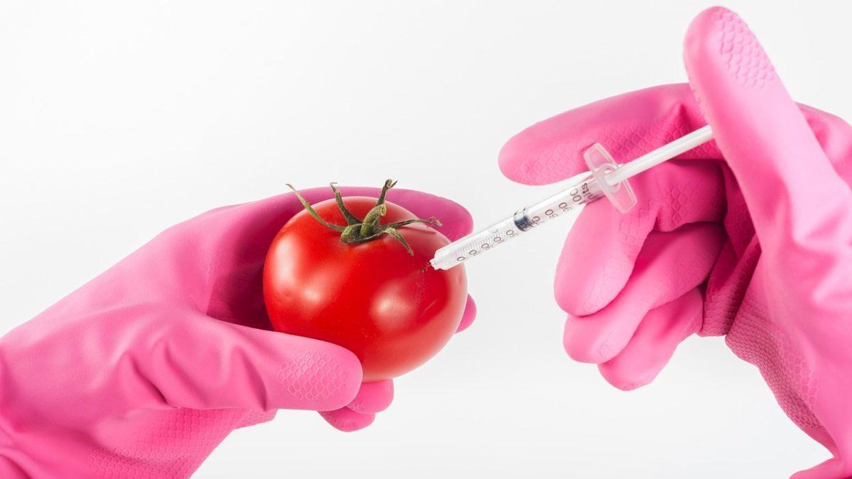 Nuovi OGM: la Gran Bretagna lancia la consultazione pubblica
