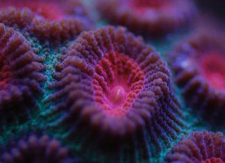 Sbiancamento dei coralli: una nuova scoperta aiuta la prevenzione