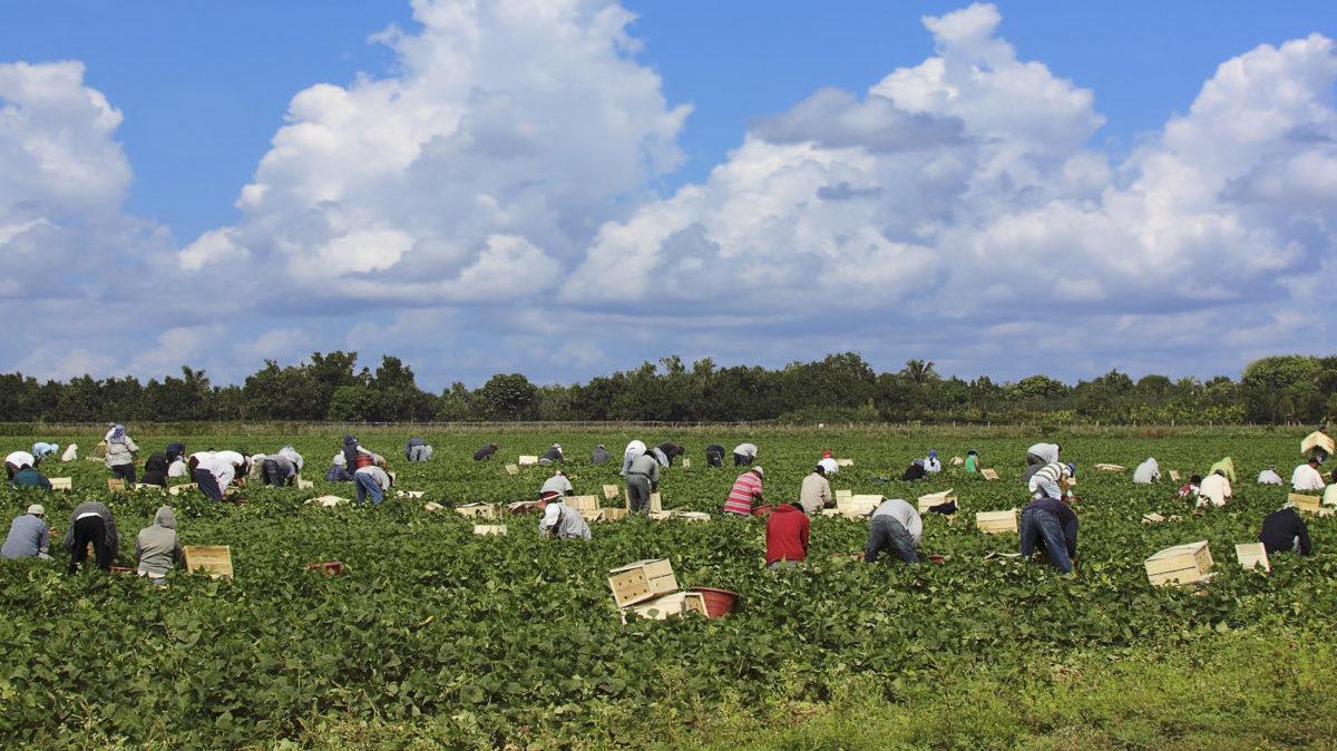 Riforma della PAC: i diritti dei lavoratori spaccano i negoziati