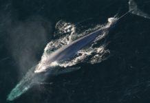 Inquinamento acustico, così l'uomo compromette mari e oceani