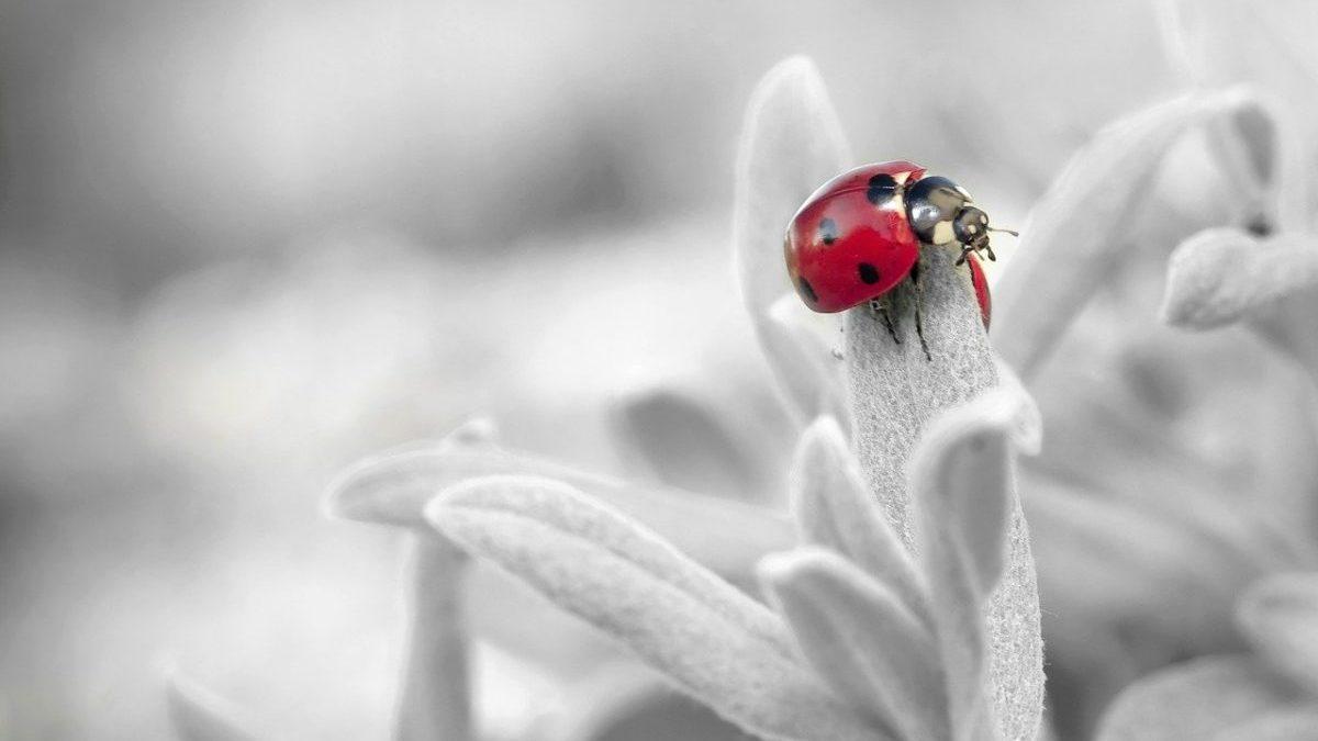 Biodiversità: per la Gran Bretagna servono soluzioni radicali