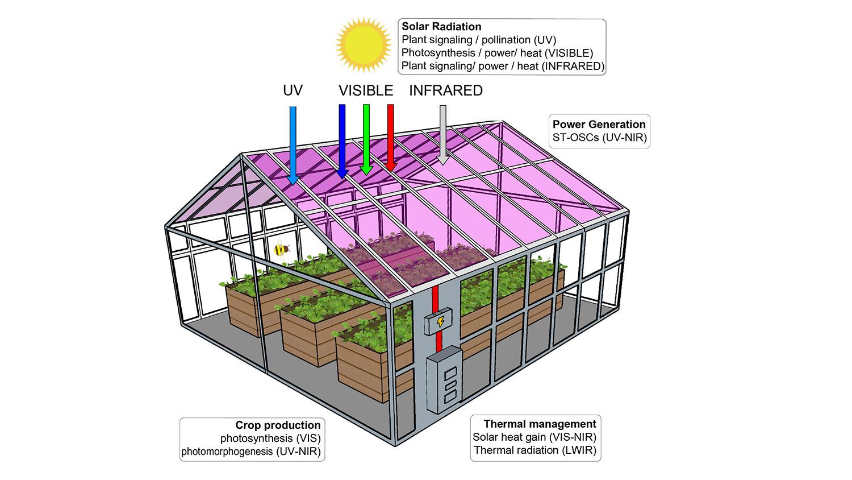 Celle solari trasparenti
