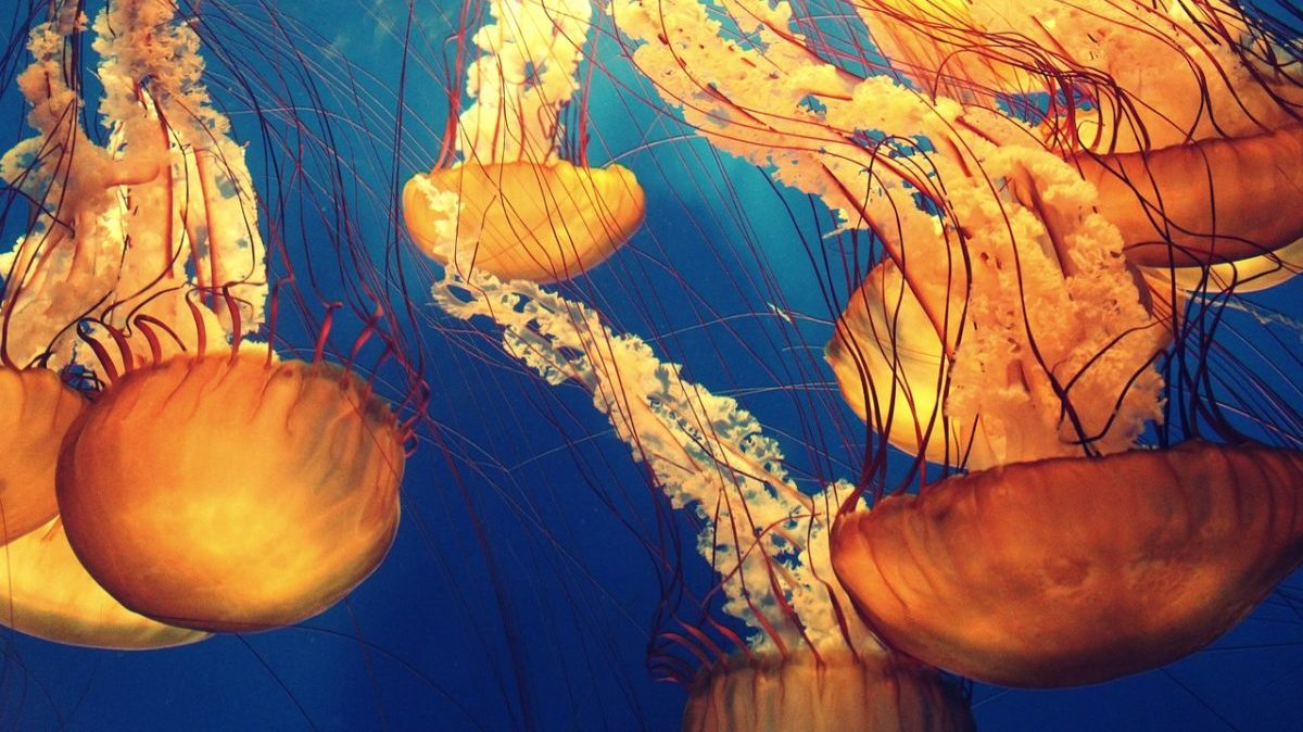Tutela degli oceani: ecco le aree marine che la COP15 deve proteggere