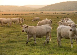 agricoltura allevamenti