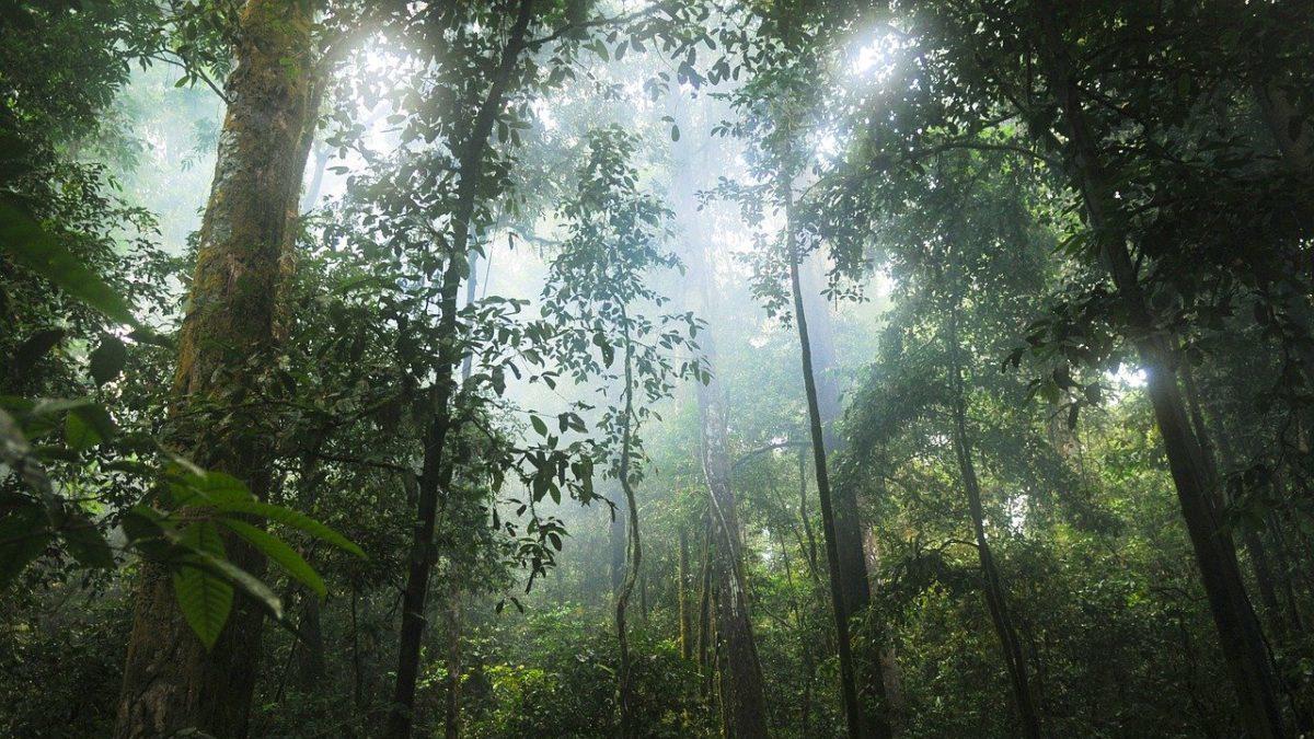 Foreste pluviali: devastato il 64% a livello globale