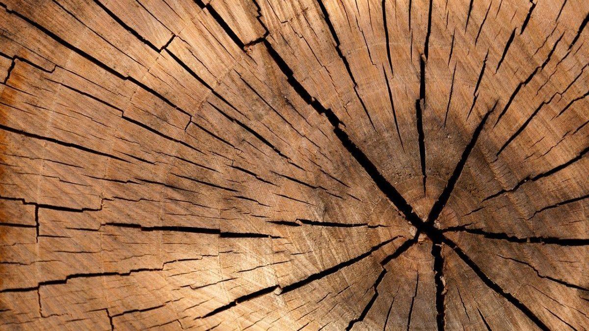 Neutralità climatica: non basta una Terra per tutti i piani di carbon offset