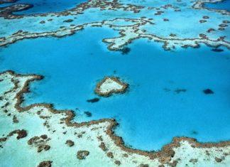 scogliere coralline