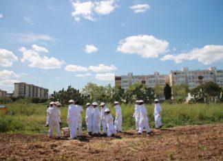 Biomonitoraggio urbano