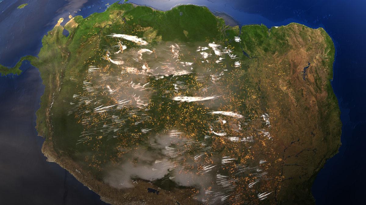 Deforestazione: nasce la Leaf Coalition per proteggere le foreste tropicali