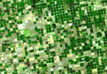Riforma della Pac: gli agricoltori cechi contro Copa-Cogeca