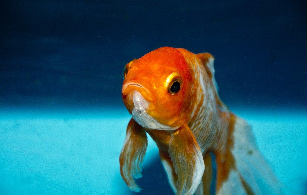 Il riscaldamento globale fa migrare i pesci verso i Poli