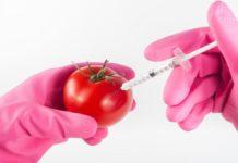 Nuovi OGM: l'UE vuole dare l'ok alle New Breeding Techniques