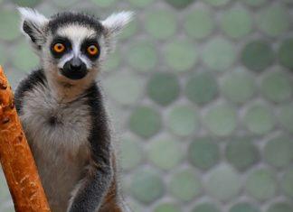 Biodiversità: il riscaldamento globale spazza via le specie endemiche