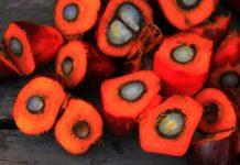 Biocarburanti: Bruxelles, attenta all'olio di palma