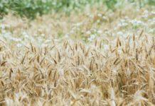 Riforma della Pac: la voce dei piccoli agricoltori