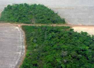 Deforestazione dell'Amazzonia: impennata ad aprile, +43%