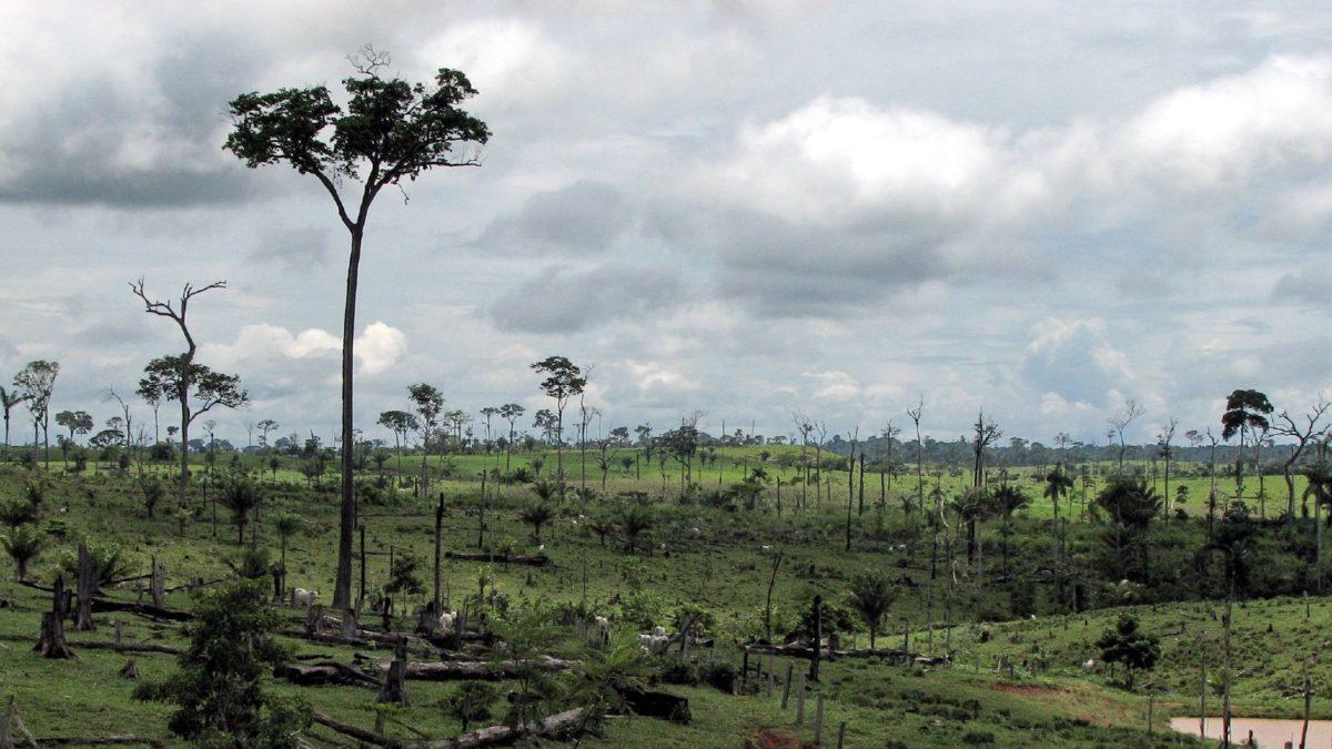 Amazzonia: da 10 anni emette più gas serra di quanti ne assorbe