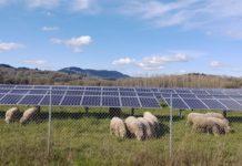Pascoli e pannelli solari